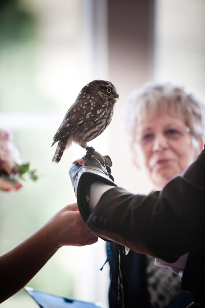 hoscote wedding photography owl ring delivery
