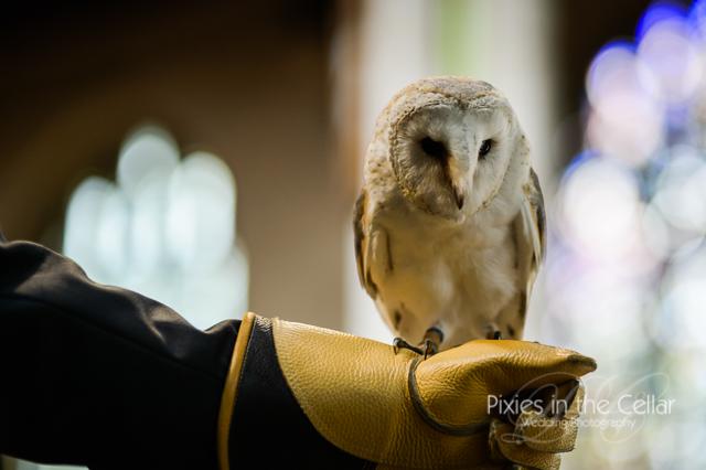 barn owl ring bearer