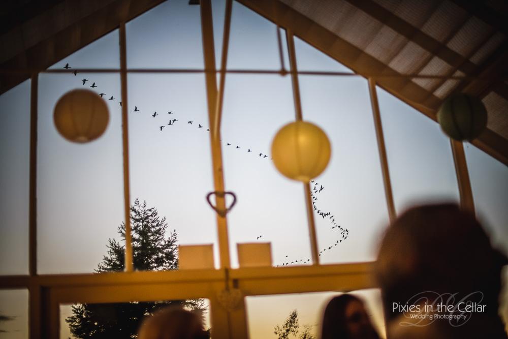 Abbeywood Wedding birds flying