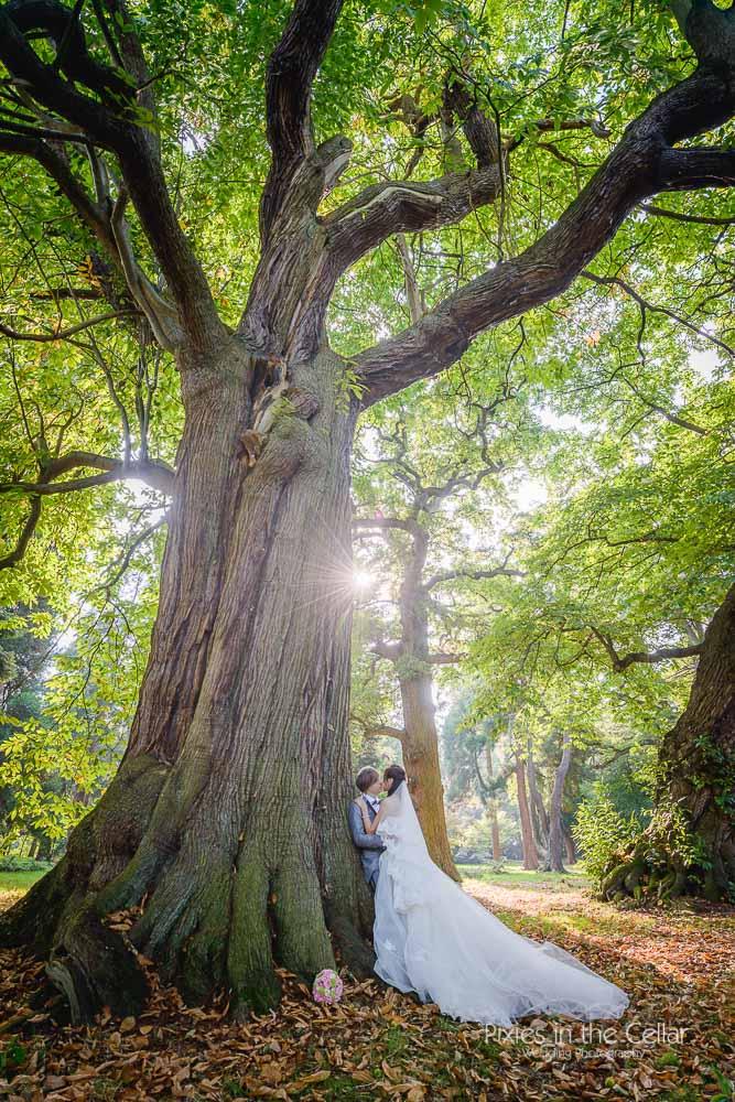 wedding couple and big tree