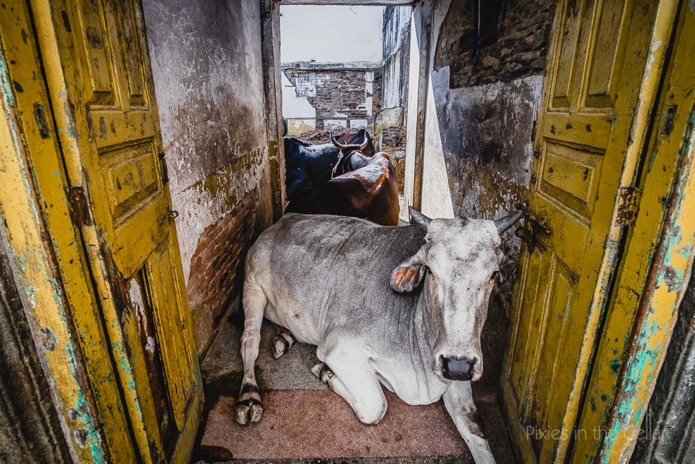 129-india-travel