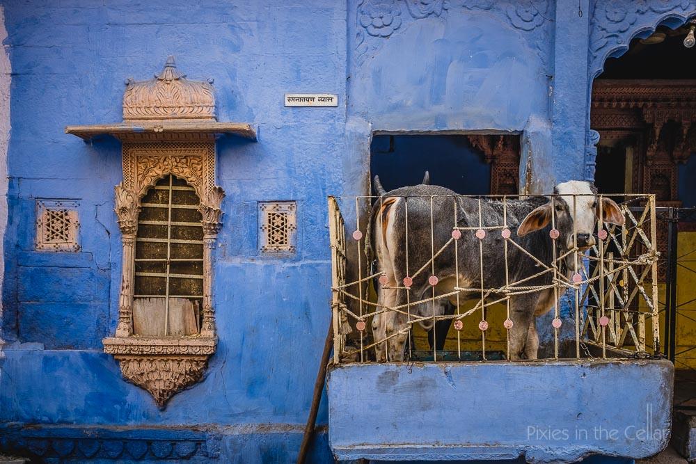 141-india-travel