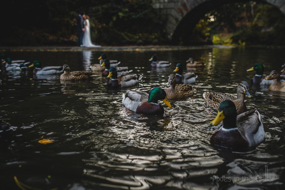 ducks UK elopement photography autumn