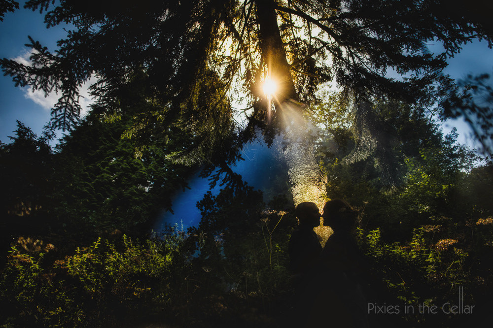 best summer wedding photos tree silhouette