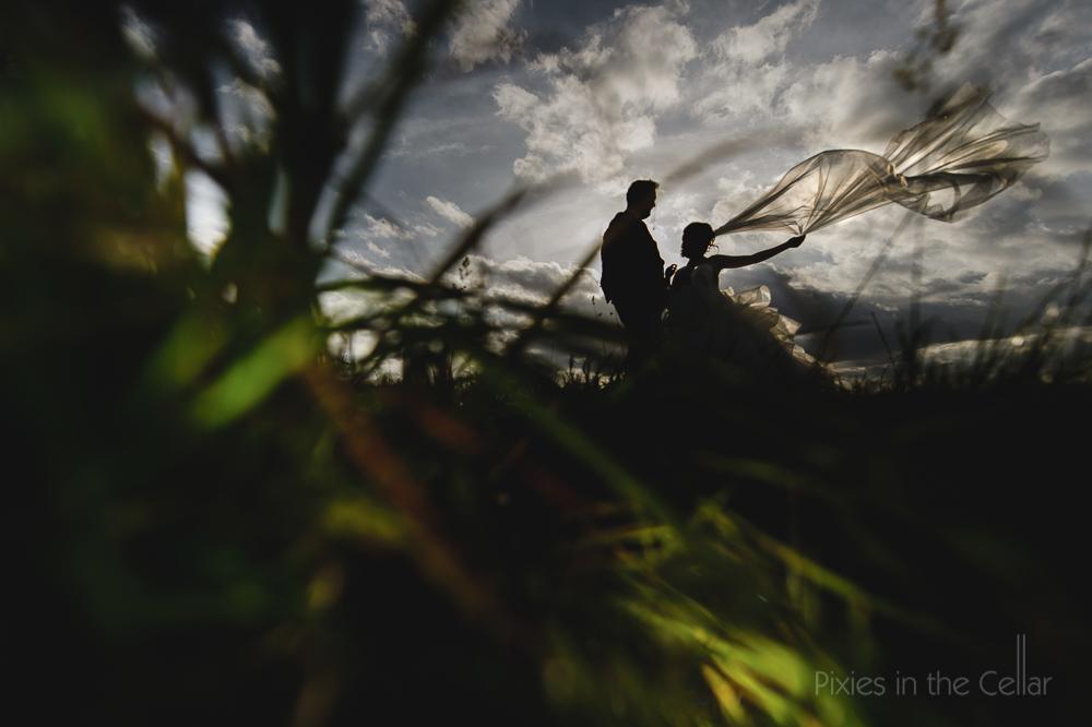 wind veil grass