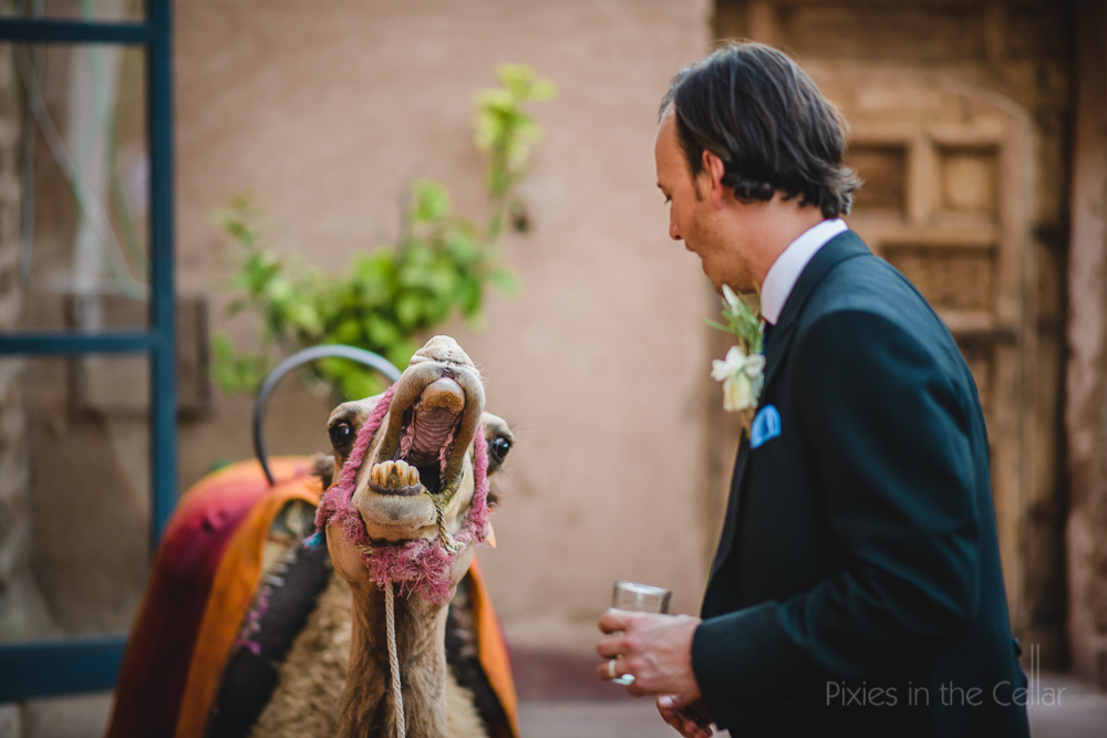 camel and groom